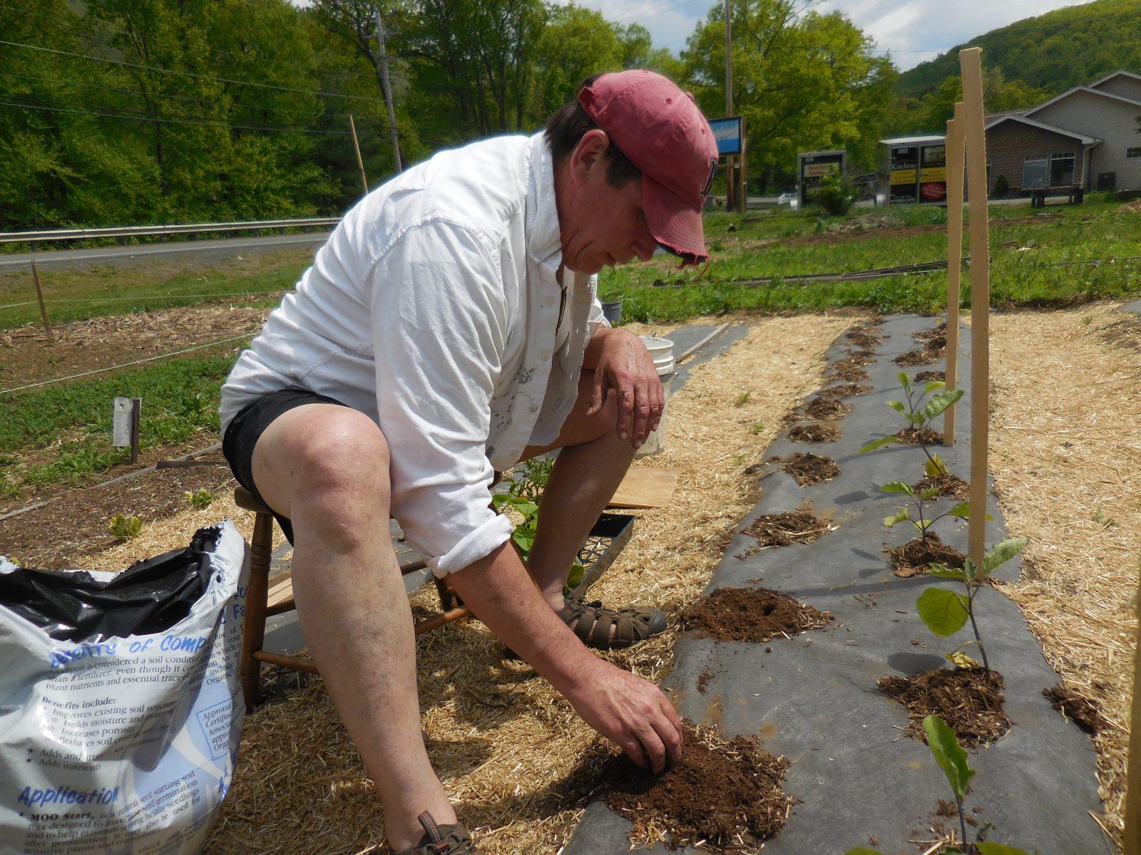 Growing vegetables community garden style