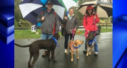 Bark for Life event held at Stanley Park Sunday