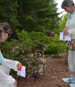 Providence Arboretum A Living Icon For Generations To Come
