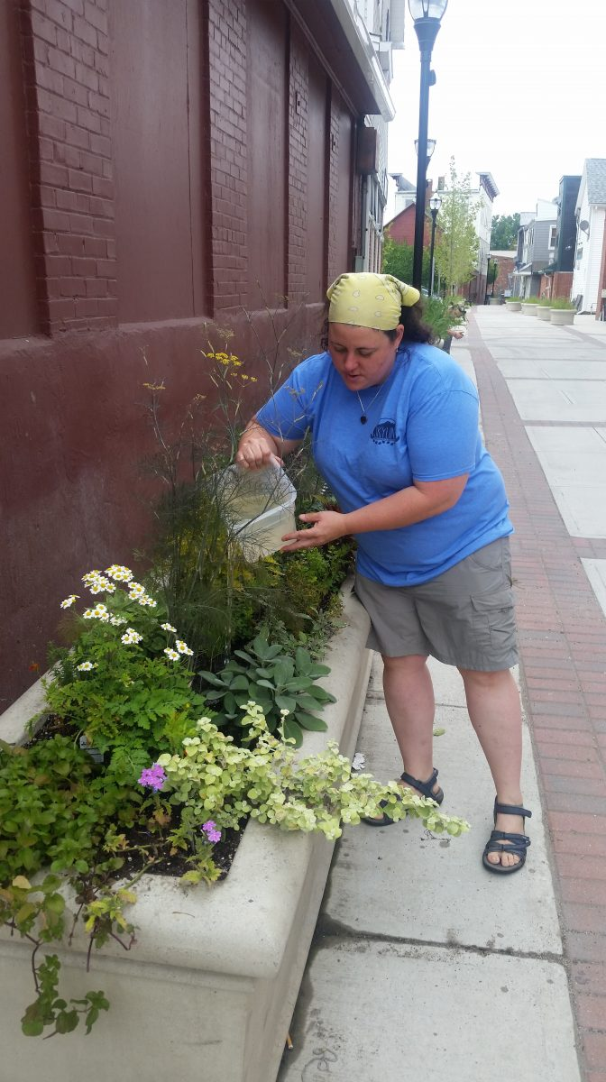 Downtown businesses adopt planters, beautify area